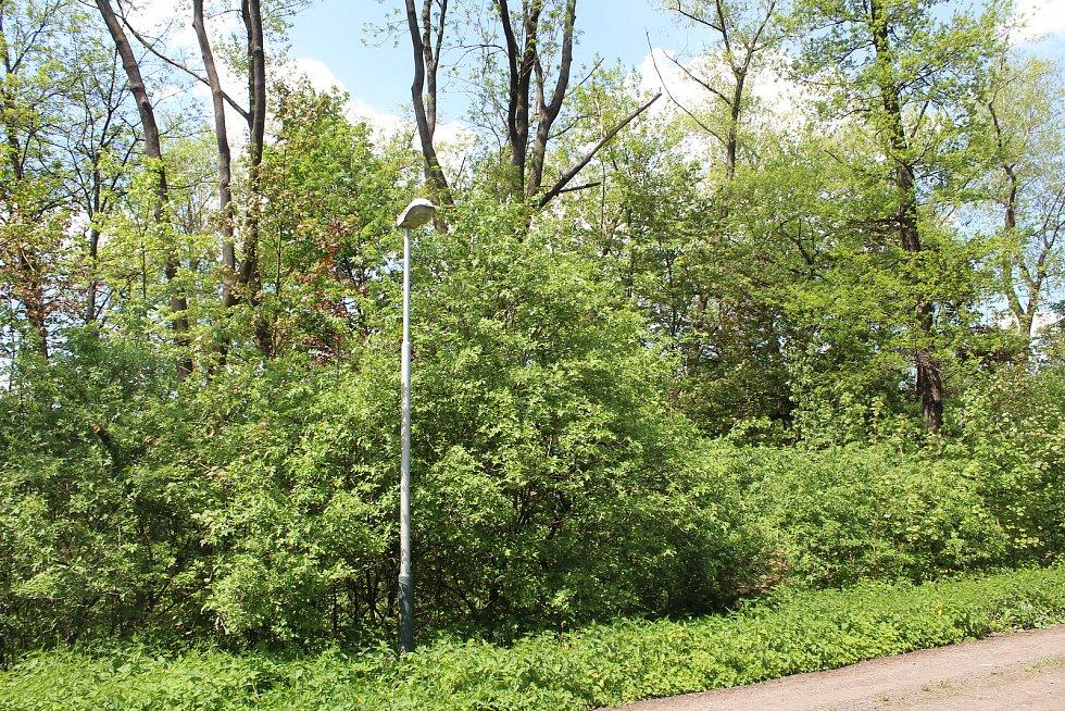 Usedlíkům v Ostravě-Kunčicích se nelíbí záměr výstavby skladovací haly a kácení toho mála lesního porostu (na snímku pozemky patřící stále Liberty Ostrava), který v okolí je. Obávají se také zvýšení frekvence nákladní dopravy a skladování stavebního mater