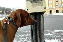Černý, lepkavý a smrdutý nátěr má zabránit uvazování psů.