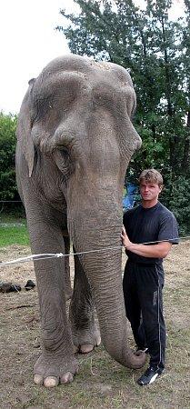 Hynek Navrátil sjedním ze slonů indických zcirkusu Humberto.