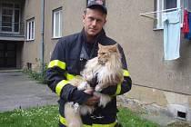 Plné ruce práce měli hasiči se záchranou devítikilogramové, téměř metr měřící kočky.