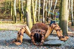 Obří dřevěný pavouk v ostravské ZOO.