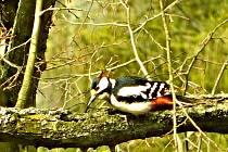 Barevný ptačí lékař 2