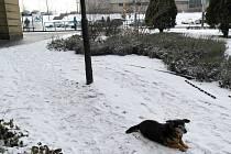 TOHLE JE ŠPATNĚ. U umazaného sloupu se pes uvázat nedá, ale nechat ho bez vodítka odporuje vyhlášce.
