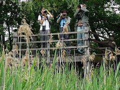 Ornitologická pozorovatelna u Heřmanického rybníka je sice jen vyvýšené pódium, ale svému účelu slouží dobře.