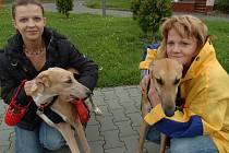 Lucie Rašková a její kamarádka dovádějí se svými novými čtyřnohými miláčky, kteří by byli bez jejich pomoci zřejmě už po smrti.