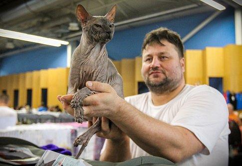 Mezinárodní výstava koček na ostravském výstavišti Černá louka.