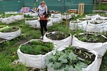 Jednou z ostravských pěstitelek, která se o svou zelenou úrodu chodí do komunitní zahrady Tržnice pravidelně starat, je i Lucie Sembolová.