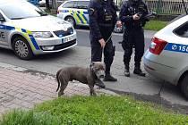 Případů napadení dětí psy v Ostravě přibývá. Policie vyzývá majitele i rodiče. Ilustrační foto.