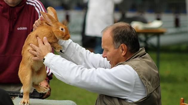 Oblastní výstavní trh chovných králíků v Bílovci má dlouhodobou tradici. V sobotu 25. ledna se zde uskuteční již 54. ročník této akce. Nejen pozvánku na ni najdete v dnešních celoregionálních Tipech na víkend 25. a 26. ledna.