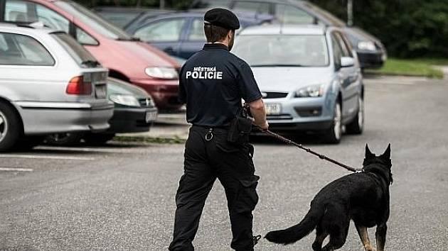 Služební pes v hlavní roli.