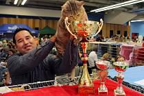 Na ostravské Černé louce si daly dostaveníčko kočičí šampioni z Česka i ze zahraničí