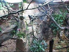 V ostravské zoo byla v sobotu otevřena nová expozice. Jmenuje se Malá Amazonie a byl o ni velký zájem.