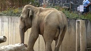 slon deníku