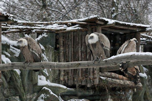 Zvířata vostravské zoo vzimě regenerují. Chladnější počasí láká ven iexotická zvířata.