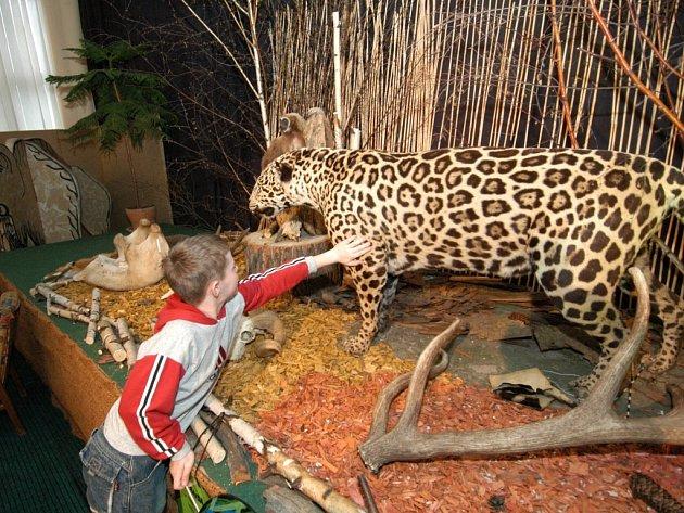 Z výstavy Rekordy a kuriozity ze světa zvířat