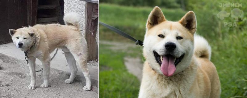 Aki před a po.