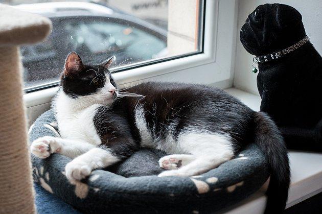Kočcafé vcentru Ostravy - kočičí kavárna