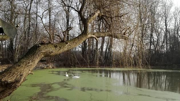 Probouzející se jaro objektivem Ludmily Karčové.