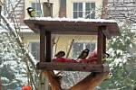 Ptáci na krmítku