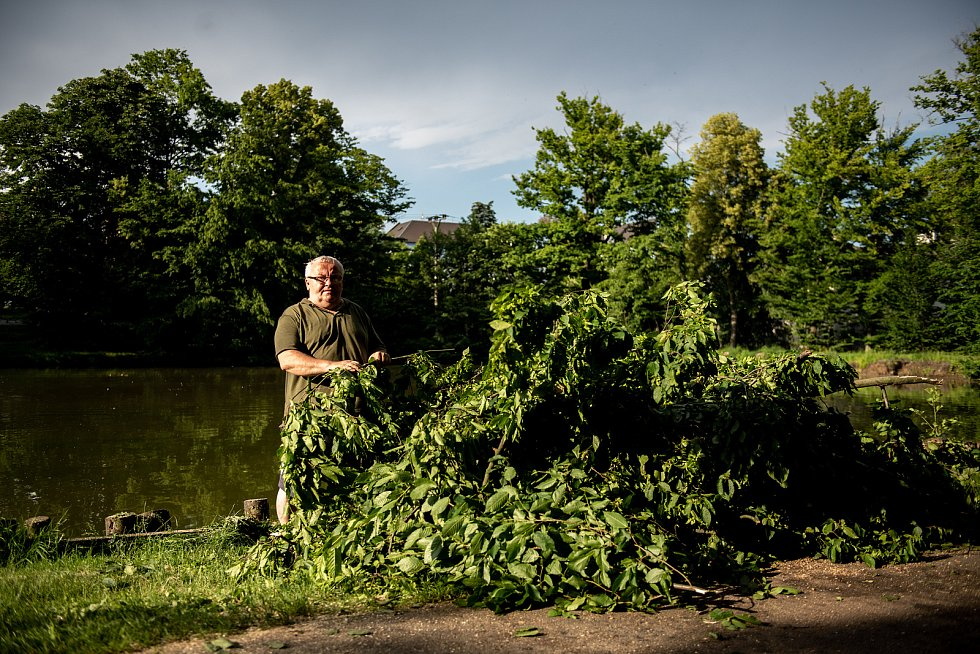 Spadlý strom v parku Petra Bezruče a zvednutá hladina potoku Polančice, 27.6.2020 v Ostravě-Klimkovicích.