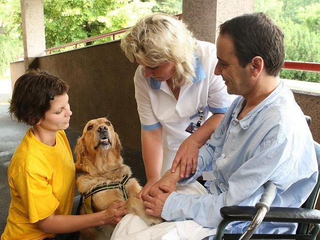 Psi pomáhají léčit. K takovým pomocníkům patří i fenka zlatého retrievera Chelsea.