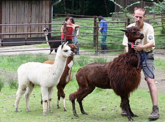 Kadeřnický salon v ostravské zoo