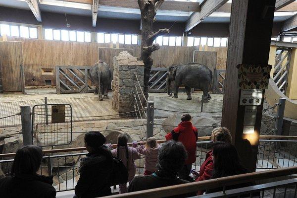 Ondra, Kryštof, Lucie a Julie. Další čtyři děti, kterým vtomto týdnu Deník splnil jejich vánoční přání. Chtěli se podívat do ostravské zoologické zahrady a pozdravit sloní mládě Rashmi.