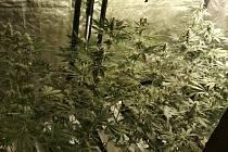 """Jeden z pachatelů tam na statku choval drůbež, jako """"přidruženou výrobu"""" si pořídil pěstování marihuany."""
