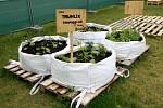 Komunitní zahrada na Tržnici.