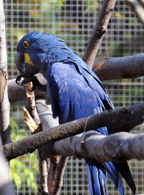 V ostravské zoo slavili Den zvířat