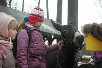 Jablka, mrkve nebo třeba oříšky věšely v sobotu děti na stromky v ostravské zoologické zahradě. Před Vánoci je tak malí návštěvníci zahrady zdobili vším, co mají zvířátka ráda.