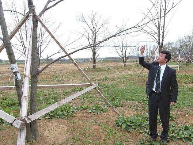 Rašící lístky jednoho z přesazených stromů si prohlíží Jung Joo-Yong. Tento zaměstnanec tiskového oddělení společnosti Hyundai se u nás nechává oslovovat tradičním českým jménem Josef.