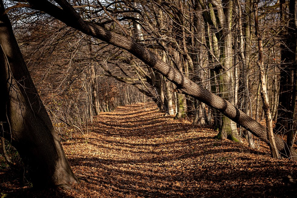 Národní přírodní rezervace Polanská niva, 22. listopadu 2020 v Ostravě.