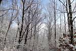 Procházka čtenářky Evy Raidové zasněženou krajinou kolem Stříbrného jezera.