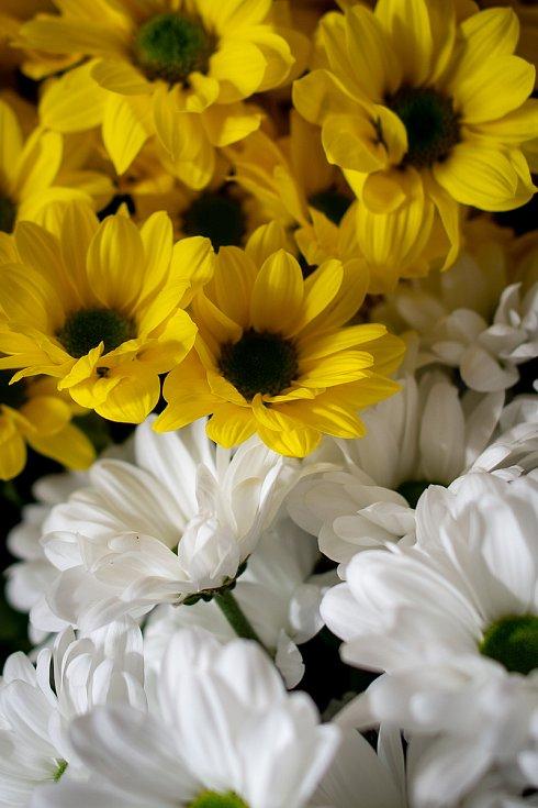 Květinářství Bedřiška na Nádražní ulici má otevřeno denně.