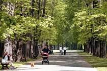 Lipová alej v Komenského sadech