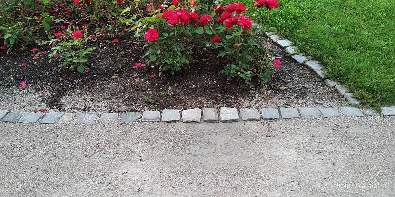 Žena zemřela v růžích, které sama vysadila.