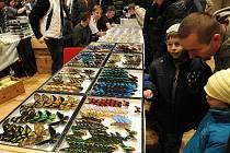 Sobotní burza plazů, exotického hmyzů a akvarijních rybiček se uskutečnila v DK Ostrava.
