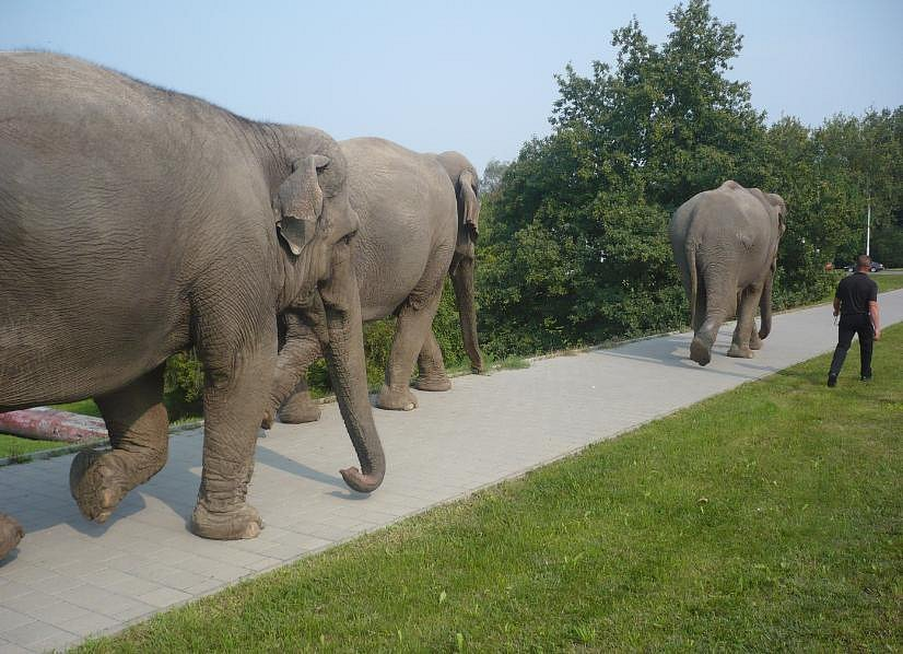Sloni v Porubě