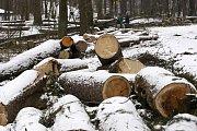 Lesním komplex Březí - kácí se zde jako o život. Vykácená část prý ale bude do dvou let opět zalesněná.