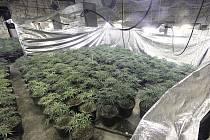 Policisté v moderně vybavených velkopěstírnách našli bezmála 1500 rostlin konopí.
