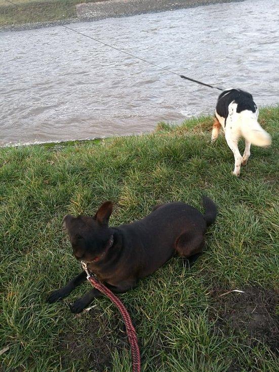 Cody na procházce k řece v doprovodu kamaráda Rexe.