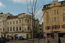 Stromy na Masarykově náměstí