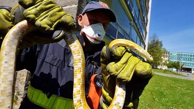 Ostravští hasiči vyjeli kvůli letícímu hadovi.