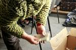 Počítání příspěvků od ostravských dárců do Tříkrálové sbírky v ostravské Charitě.