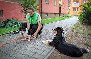 Reportáž - nevidomý s vodicím psem. Na fotografii vodicí psí fenka Malina.
