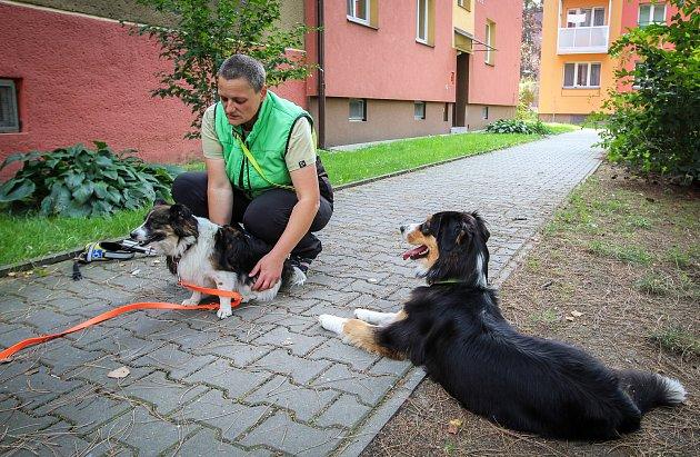 Reportáž - nevidomý svodicím psem. Na fotografii vodicí psí fenka Malina.
