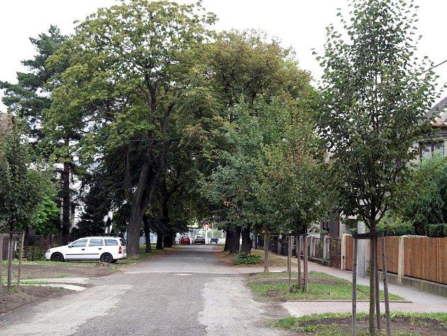 OVaK ve Starobělské ulici opravuje kanalizační přípojky, pokácení jednoho stromu některé místní usedlíky docela nahněvalo.