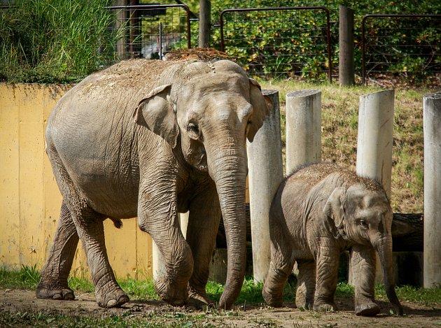 Sloni vostravské zoo.