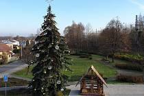 Strom v Petrovicích